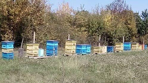 пчелин истински мед Малък Искър